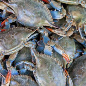 Blue Crab 14 300x300 - SEAFOOD