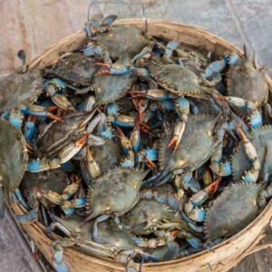 Blue Crab 8 300x300 - SEAFOOD