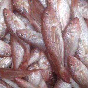 JTB fish 1 300x300 - SEAFOOD
