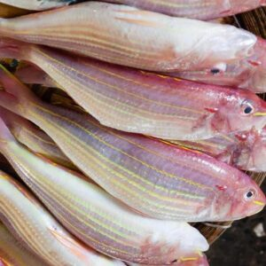 JTB fish 5 300x300 - SEAFOOD