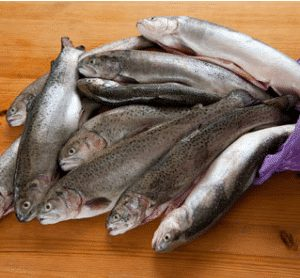 Trout Fish 1 300x278 2 - SEAFOOD