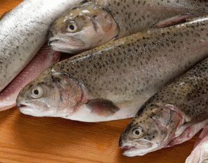 Trout Fish 4 300x235 2 - SEAFOOD