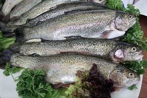 Trout Fish 5 300x200 - SEAFOOD