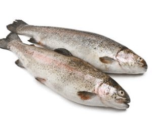 Trout Fish 6 300x230 2 - SEAFOOD