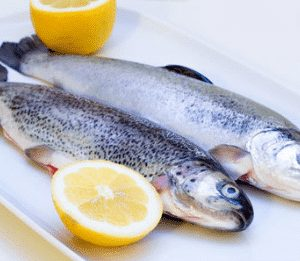 Trout Fish 7 300x261 2 - SEAFOOD