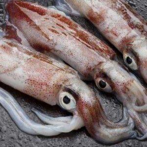c7f9c7badb4b3205e03db9ef95101552 squid fish 1920 c 90 300x300 - SEAFOOD