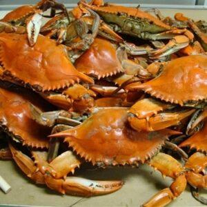 medium Blue crab 1 300x300 - SEAFOOD